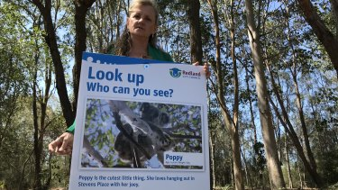 Redland City mayor Karen Williams asks why almost 8000 hectares of koala habitat identified by her council, and 12,000 hectares identified by Moreton Bay Council, have been omitted from new state government koala habitat mapping.