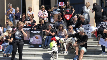 Vigil for Strawberry the boxer at WA Parliament.