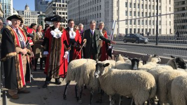 London's lord mayor leads a group driving sheep across London Bridge.