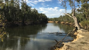 Go with the flow: The Murray River near its juncture with the Goulburn River earlier this year.