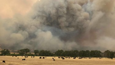 Walwa's Matt Gledhill took this picture looking north across the river to NSW as fire took off last Friday.