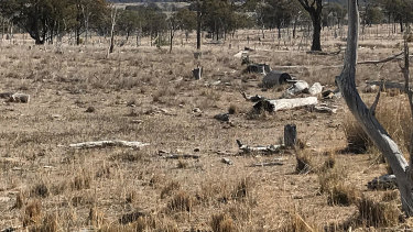 Stanthorpe is already extremely dry.