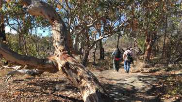 Stanthorpe will run out of water in December if there is no rainfall. Pictured are the bone-dry conditions in nearby Girraween National Park.