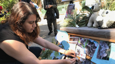 Koala carer Louisa Devadason pins a note to ministers and a koala photograph to a koala memorial outside Queensland Parliament.