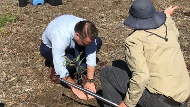 Lord mayor Cr Adrian Schrinner plans new blue gums at Brisbane's Koala bushlands at Burbank.