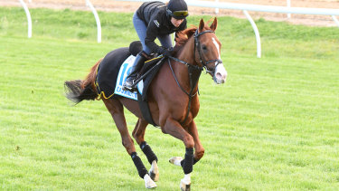 Duretto ran well in the Caulfield Cup last year, but hasn't raced since.