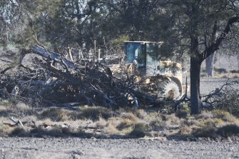 Land clearing on a property near Moree in northern NSW in August 2017 after biodiversity laws were weakened.