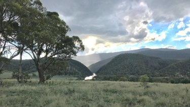 The government has quietly eased the way for farmers to clear land that may contain threatened grassland species in the Monaro and Werriwa regions of NSW.