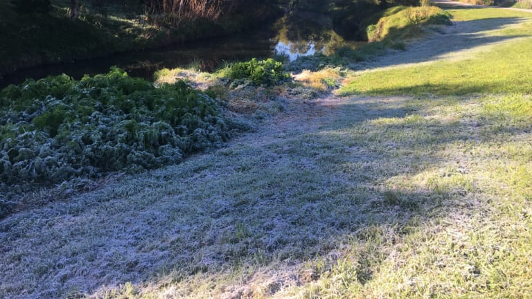 Reader Joanna sent in this photo showing the frost along Merri Creek in Melbourne on Wednesday morning.