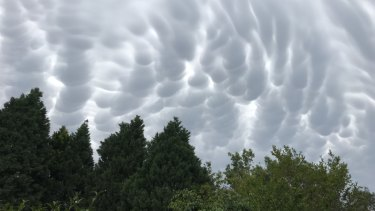 Another view of the mammatus clouds - with this image taken at about 4pm at Turramurra.
