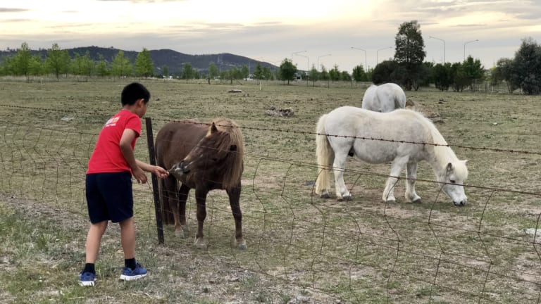 Children in Holder love to pat the ponies kept by Celia Kneen. She has had her grazing licence revoked after keeping animals on the site for more than 20 years.