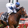 O'Brien hoping Miami Bound is on track for second Melbourne Cup run