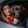 New ride-sharing feature lets you take your dog to the pub worry-free