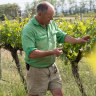 Turning the vineyards sideways: how winemakers weather the drought