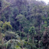 New research from UQ and CSIRO has found wilderness areas halve the extinction risk for species in them compared other habitat areas.