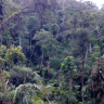 The world's wilderness is even more important than previously thought
