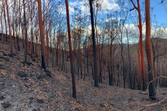 "A decimated rainforest in Mt Barney National Park. ""It was like sticks out of dust,"" said Mt Barney Lodge operator Innes Larkin."