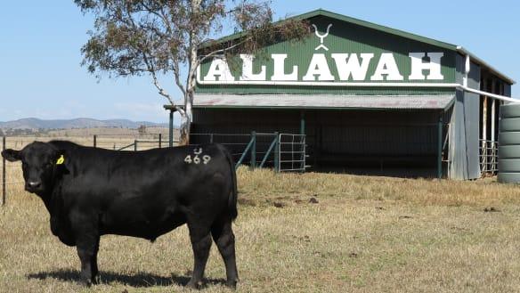 Chinese billionaire eyes former Packer cattle empire