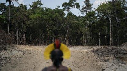 Amazon deforestation rises sharply