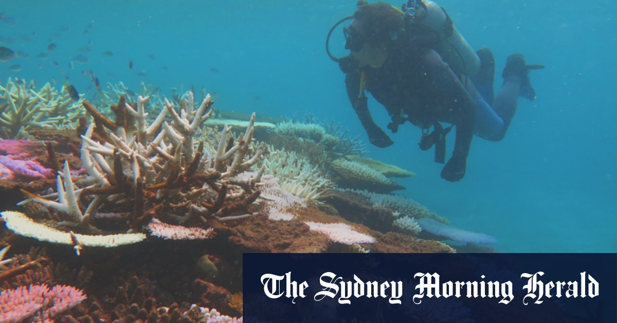 'There is no time to lose': Great Barrier Reef has lost half its corals – Sydney Morning Herald