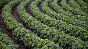 Nufarm shares were smashed on Monday after it released a negative trading update.