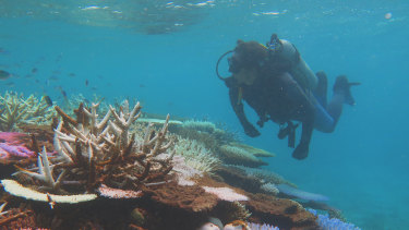 A major push to survey a large portion of the Great Barrier Reef is under way.