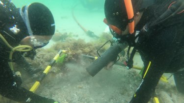 Divers uncovering the wreck of the schooner Barbara off the coast of Rye.