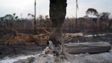 Trees are destroyed after a fire in the Alvorada da Amazonia region, in Novo Progresso, Para state, Brazil.