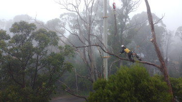 One of John McKenna's team works to bring down one of the storm affected trees in the Dandenongs.