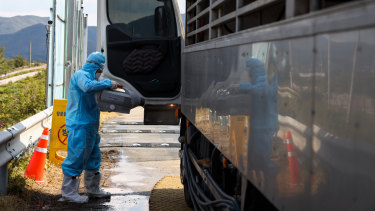 A worker sprays disinfectant into the cab of a truck near a pig farm in Yeoncheon, South Korea.