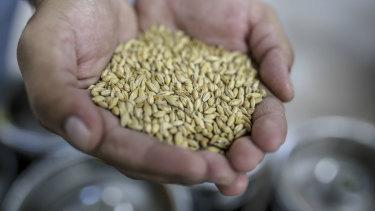 China imposed extra tariffs on Australian barley in May.