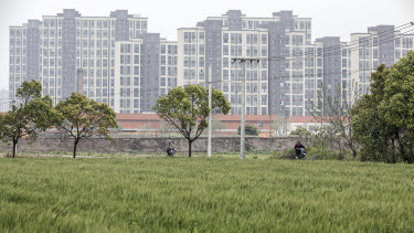 Rice grows in a field as new residential buildings stand in the background on the outskirts of Shanghai in 2017.
