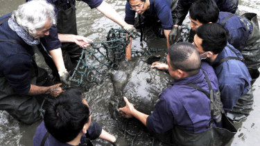 The female Yangtze giant softshell turtle is lifted out of the water at a zoo in Suzhou in eastern China's Jiangsu province in 2016.