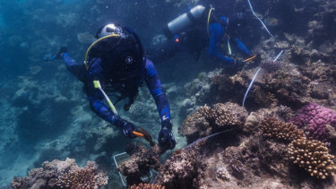 """The United Nations has warned of the """"danger"""" facing the Great Barrier Reef."""