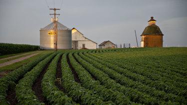 An American soybean farm.