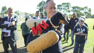 Labor leader Bill Shorten with Eva, the 'Democracy Sausage Dog', this week.