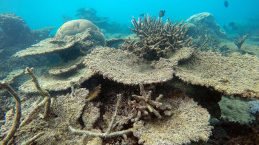 Dead coral at the Great Barrier Reef.