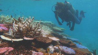 Half of the Great Barrier Reef's corals have been lost.