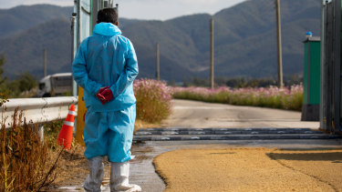 A worker stands at a vehicle disinfection system placed on a road near a pig farm in Yeoncheon, South Korea.