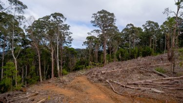 Habitat destruction: The outcome of VicForests' logging.