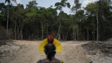 Krimej indigenous chief Kadjyre Kayapo looks at a path created by loggers on the border a nature reserve and indigenous lands in Para state, Brazil.