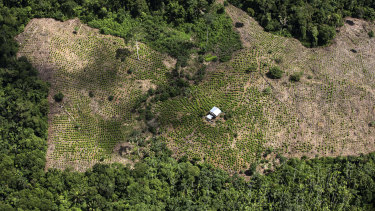 Coca fields seen from a Colombian police helicopter in May. Production of coca, the raw material for making cocaine, has more than tripled in Colombia over the last five years.