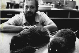 Tim Flannery, then of the Australian Museum, pictured in 1987 with specimens of the world's biggest rat that was discovered in Papua New Guinea.