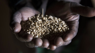 A farmer displays his harvest of teff grain at a warehouse in the village of Germama, Ethiopia.