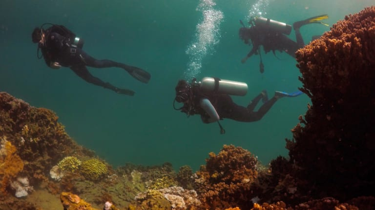 From left, researchers Ruth Gates, Beth Lenz and Jen Davidson, all from the Hawaii Institute of Marine Biology, dive near a coral reef in Hawaii's Kaneohe Bay off the island of Oahu.