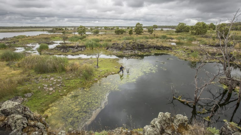 Gunditjmara engineered their land by building a complex system of weirs, channels and lakes upon the Tyrendarra lava flow which runs from Budj Bim to the sea.