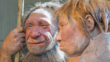 "Reconstructions of a Neanderthal man named ""N"", left, and woman called ""Wilma"", right, at the Neanderthal museum in Mettmann, Germany"