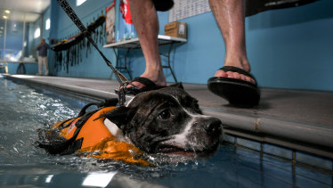 Be very careful when taking pets to pools and beaches to cool off.