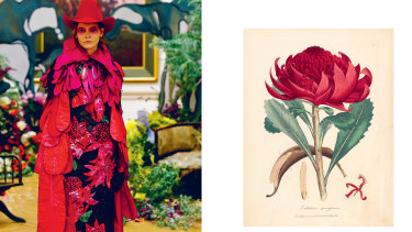 """""""Red Waratah Jillaroo"""" (left) from 2015's """"Cooee Couture"""" collection, inspired by the 1793 hand-coloured engraving by James Sowerby, """"Embothrium speciosissimum [Telopea speciosissima]""""."""