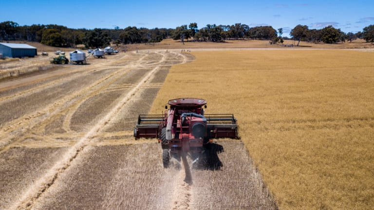 Harvesting canola in the WA wheatbelt.